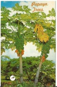 Vintage Postcard, Papaya Trees Nannie Le'e~Little Beauty Hawaii 1951