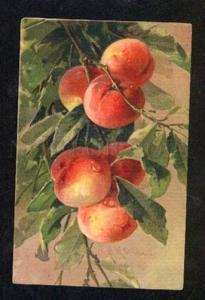 028443 PEACHES on Tree w/ Dew by C. KLEIN vintage GOM 1614 PC