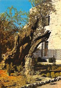 Israel Old Vintage Antique Post Card Garden of Gethsemane in Jerusalem Unused