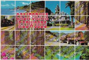 California Multi Views Of California Redwoods