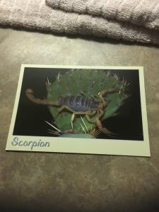 Vtg Postcard: Scorpion