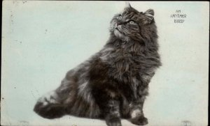 Long-Haired Cat ANOTHER BIRD c1910 Real Photo Postcard