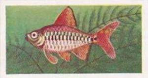 Mitchum Foods Vintage Trade Card Aquarium Fish 1957 2nd Series No 45 Sumatran...