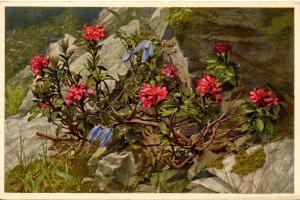 Flowers -   Rhododendron, Alpine Clematis      (Edition Stehli #744)
