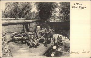 A Water Wheel in Egypt Working Animals & Natives c1905 Postcard