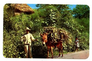 Mexico - Loaded Burro