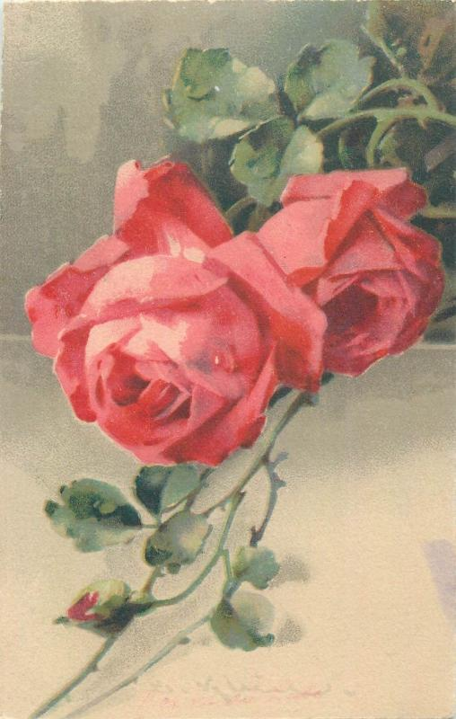 Catharina Klein roses flowers