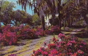 South Carolillna Low Country Plantation South Carolina