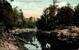Florida Scene On The Suwannee River