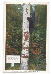 Black Bear Greetings from the White Mountains NH Postcard
