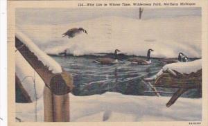 Michigan Wild Life In Winter Wilderness Park 1954 Curteich