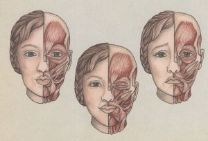 Facial Muscles Used For Kissing Smiling Winking Crying Postcard
