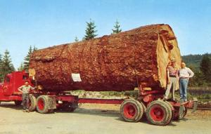 Giant Fir Log on Truck