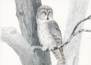 STRIX OCCIDENTALIS OWL BIRD HIBOU OISEAU EULEN VOGEL