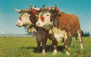 Canada Nova Scotia Halifax Prize Yoke Of Oxen