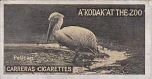 Carreras Cigarette Card Kodak At Zoo 1st Series No 13 Pelican