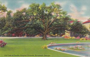 Georgia Savannah Old Oak In Chandler Hospital Grounds