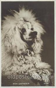 Dog Postcard Post Card Poodle 1961