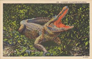 A Hungry Alligator In Florida Curteich