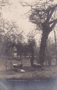 RP; ROMA, Lazio, Italy, PU-1913; Villa Borgnese, Cattle