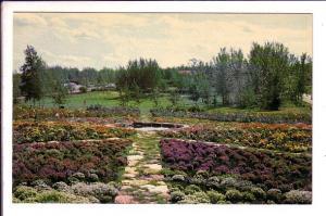 Flower Garden Phantom Lake, Flin Flon Manitoba,