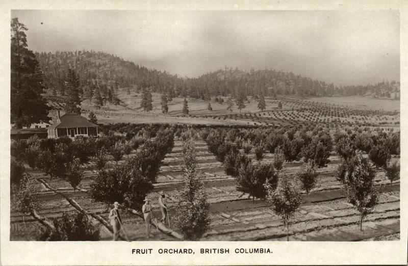canada, Fruit Orchard in British Colombia (1930s) RPPC