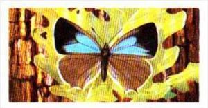Brooke Bond Tea British Butterflies No 38 Purple Hairstreak