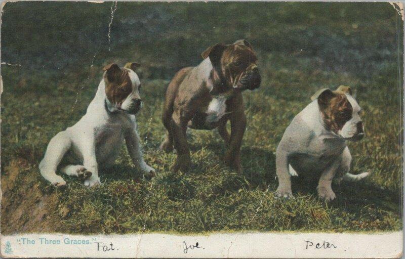 The Three Graces vintage postcard, Tuck & Sons