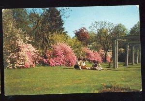 Springfield, Massachusetts/MA Postcard, Flower Garden, Forest Park, 1965!