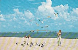 Florida St Petersburg Fort De Soto Park Feeding The Sea Gulls