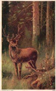 ?Vintage Postcard 1911 Deer Wild Forest Animal Painting Artwork