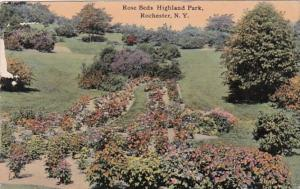 New York Rochester Rose Beds In Highland Park