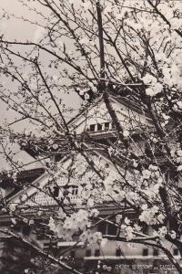 RP; Cherry Blossom and Castle, Osaka, Japan, 20-40s