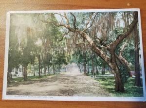 Antique Postcard entitled Ridgewood Avenue, Daytona, Fla.  Phostint 13432