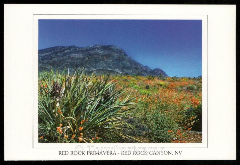 Red Rock Primavera - Red Rock Canyon