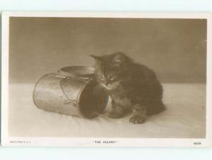rppc 1920's KITTEN CAT IS THE CULPRIT AC8895