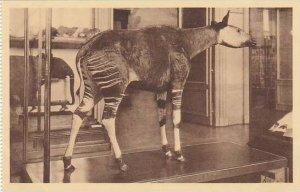 Belgium Tervuren Musee de Congo L'Okapi