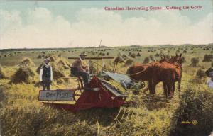 Canadian Harvesting Scene, Horse Plough, Cutting The Grain, CANADA, 1900-1910s