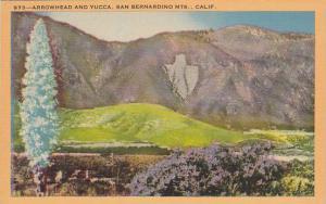 Arrowhead And Yucca, San Bernanrdino Mountains, California, 1930-1940s