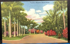 Florida Royal Palms Tropical Vintage Postcard