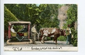 424455 PORTUGAL MADEIRA Funchall Bullock cart Vintage postcard