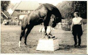 Hippique sport horses horse and a kid RPPC 03.95