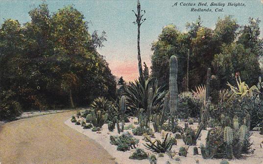A Cactus Bed, Smiley Heights, REDLANDS, California, PU-1912