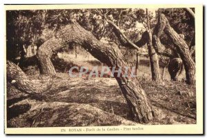 Old Postcard Royan Foret Coubre twisted Pins