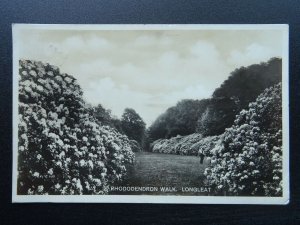 Wiltshire Warminster LONGLEAT Rhododendron Walk c1930s RP Postcard by Wilkinson