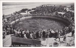 Florida Marineland Feeding Time Marine Studios Real Photo