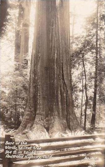 California Redwood Highway Base Of The Worlds Tallest Tree 364 Ft In Height R...