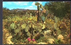 Prickly Pear Cactus,Desrt Garden