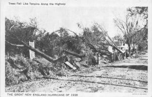 12507 The New England Hurricane of 1938  Trees fell Like Tenpins along the hi...