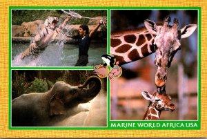 California Vallejo Marine World Africa USA White Tiger Giraffe and Elephant